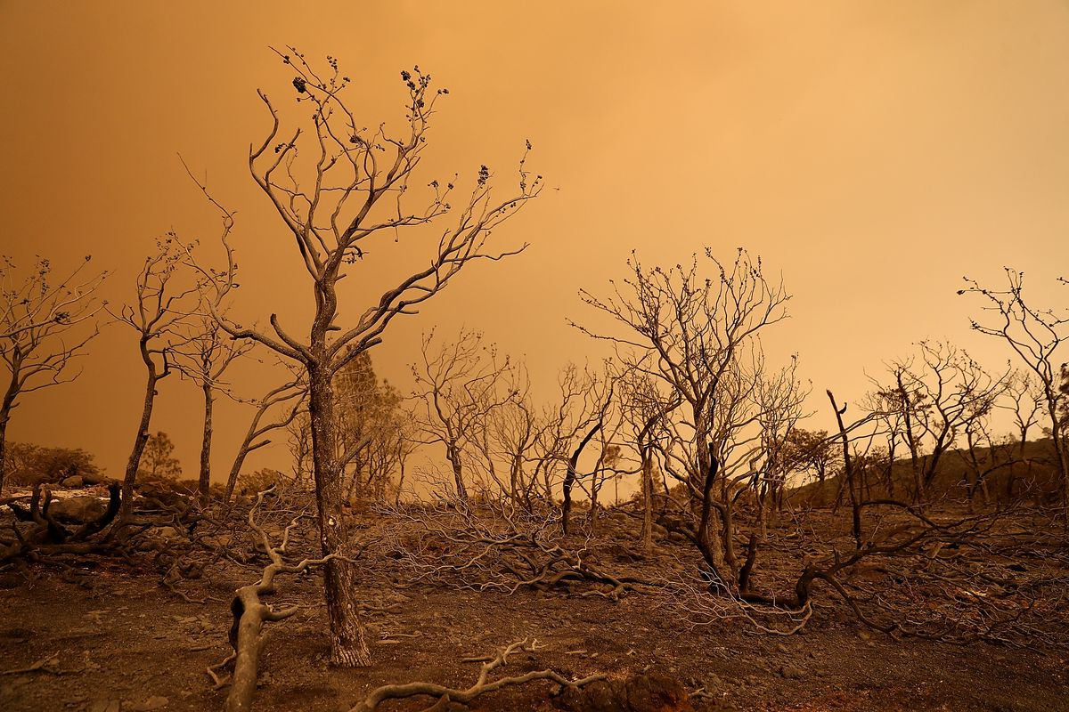Trees Burned By The Mendocino Complex Fire Near Lodoga California Justin Sullivan Getty Images