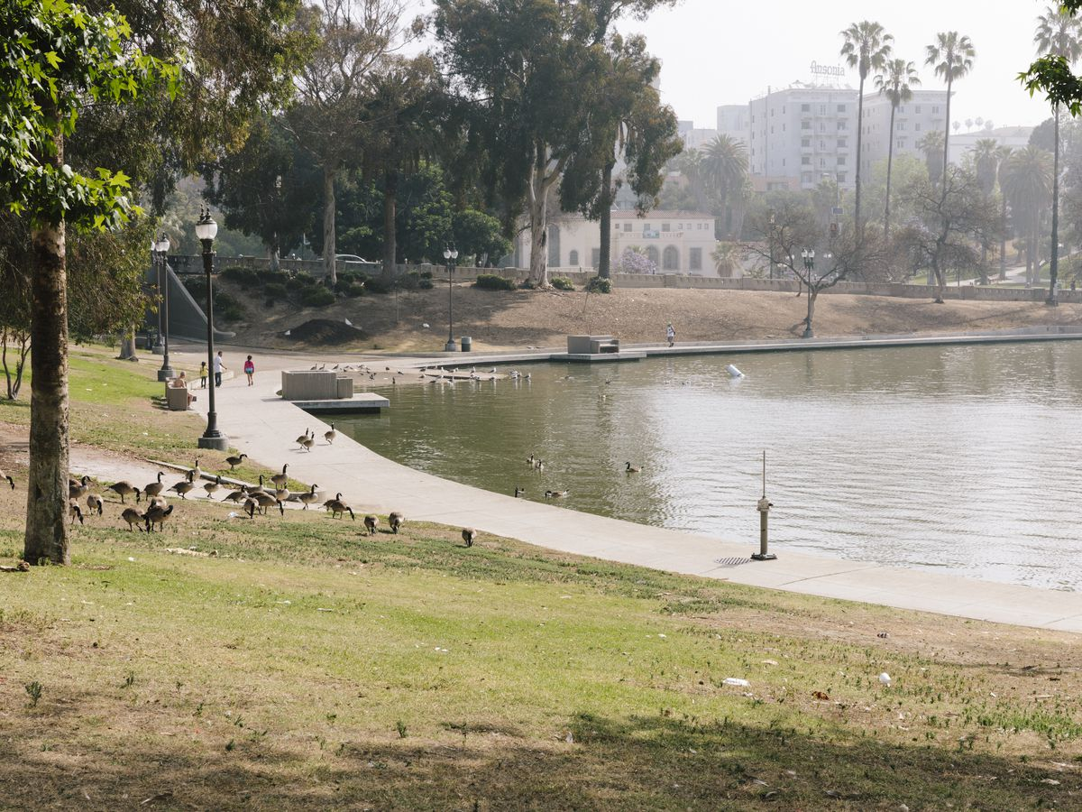 A lake ringed in concrete abuts a grass lawn with trees and lots of ducks. A couple of mid-sized buildings are in the background.