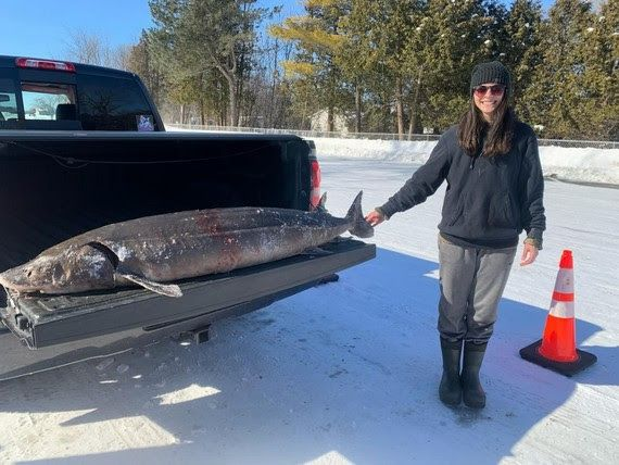 Emily Muche harvested this 121.8 pound (76.1 inches) F4 female on Lake Winnebago during day 4 of the 2021 sturgeon spearing season. / Photo Credit: Wisconsin DNR