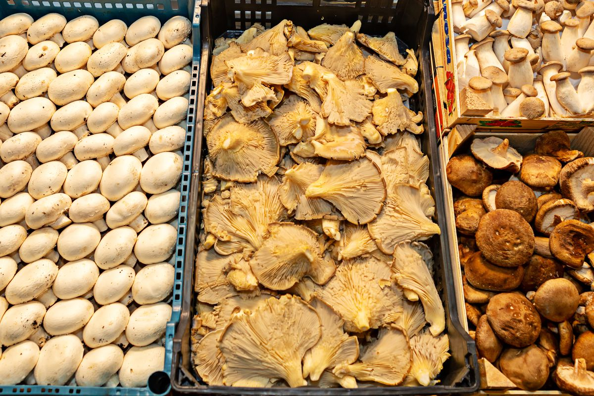 Mushrooms are full of physiologically beneficial compounds.