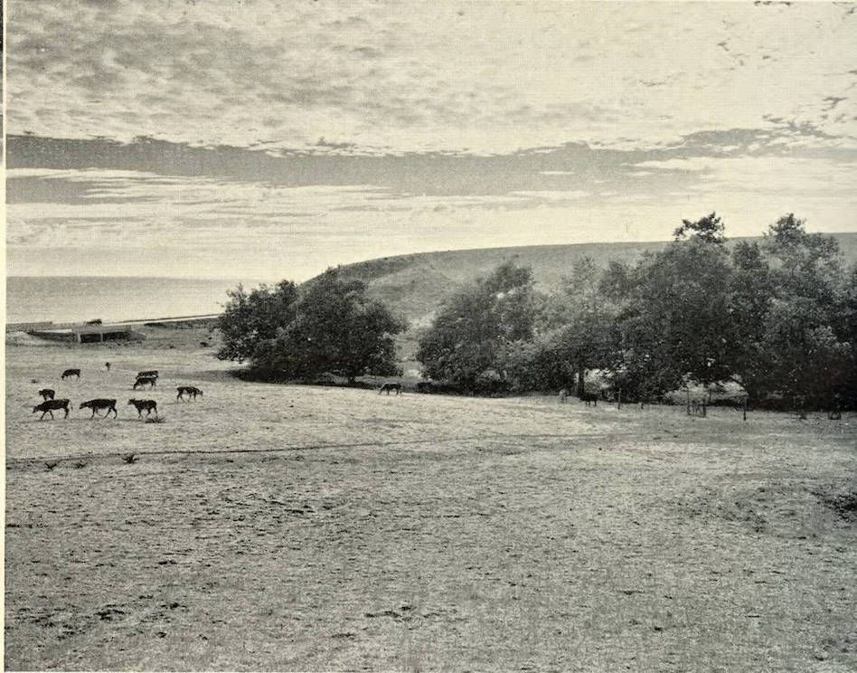 The History Of How Malibu Grew Curbed La