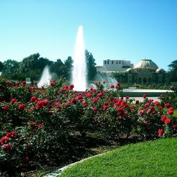 """<a href=""""http://www.laparks.org/exporosegarden/rosegarden.htm""""><b>Exposition Park Rose Garden</b></a> (701 State Dr): Operated by the Los Angeles City Department of Recreation and Parks since 1928, this South LA urban oasis is a frequent stop for both loc"""