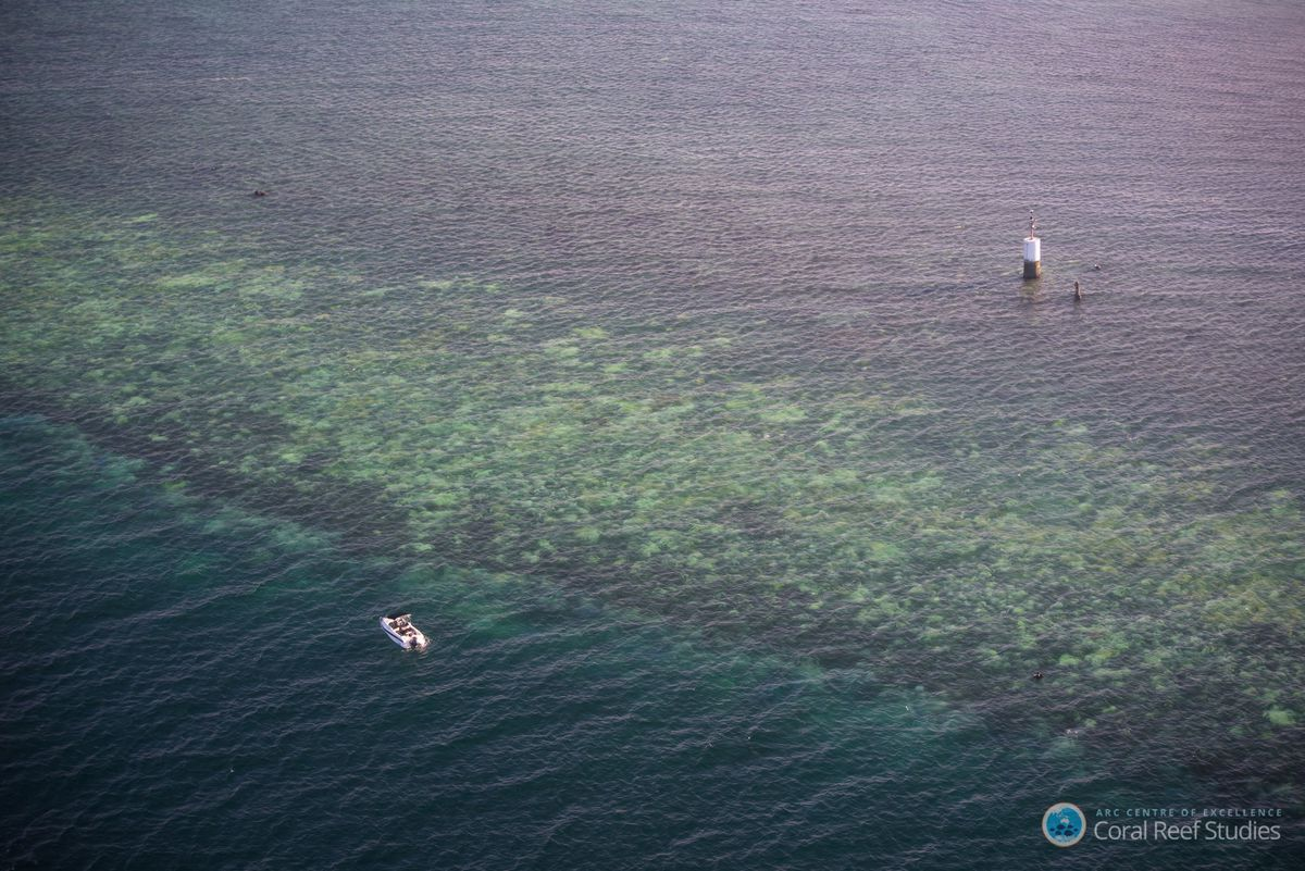 Aerial survey of coral bleaching in the Great Barrier Reef. (Terry Hughes/ARC Centre of Excellence for Coral Reef Studies)