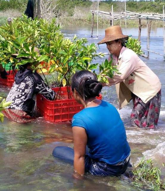 Cool Effect is helping restore Mangroves in Myanmar, an important sink for carbon dioxide to help fight climate change.
