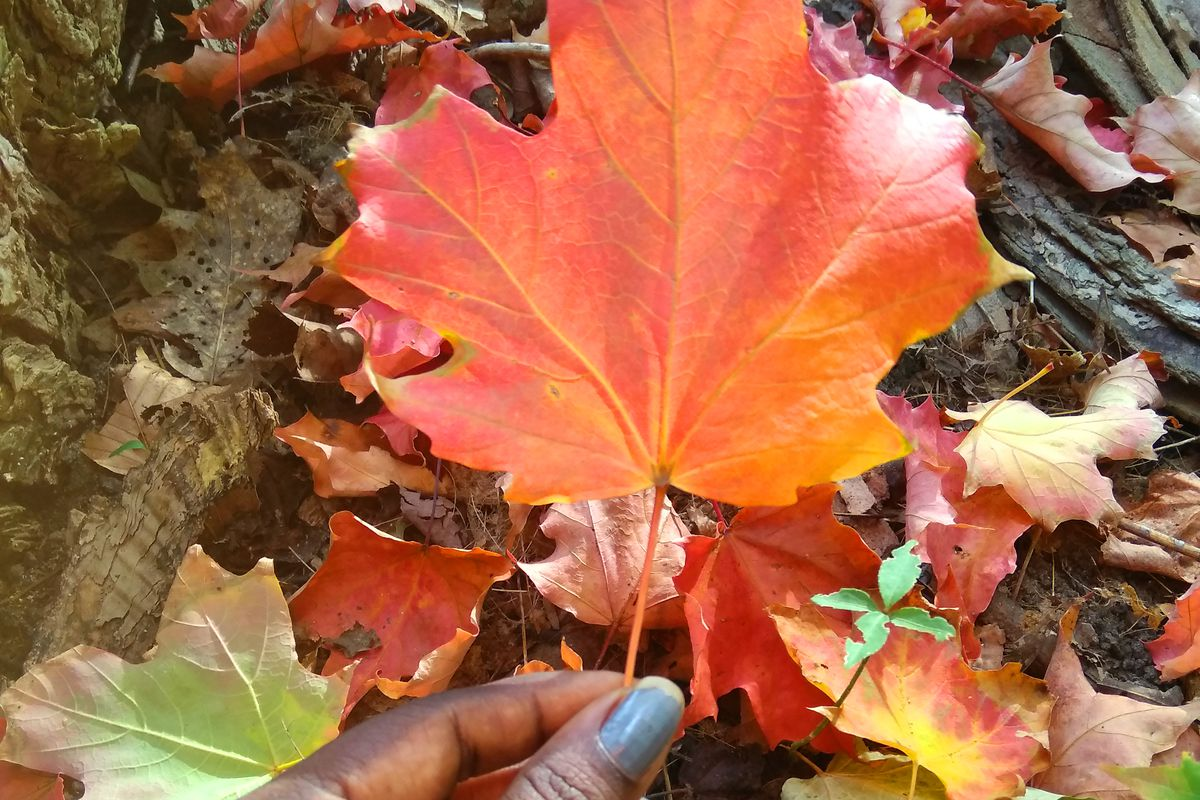 A woman holds up a maple leaf in Canada