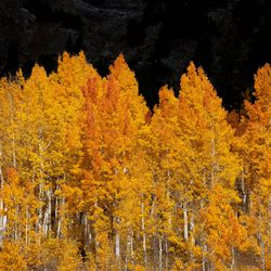 Fall colors are pictured in Little Cottonwood Canyon on Thursday, Oct. 7, 2021.