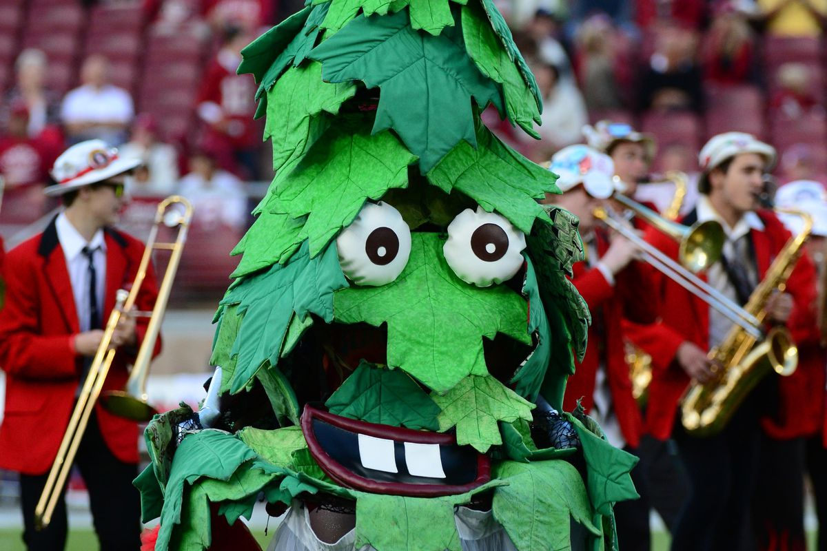 It's football season, which means the return of the Stanford band and that crazy tree.