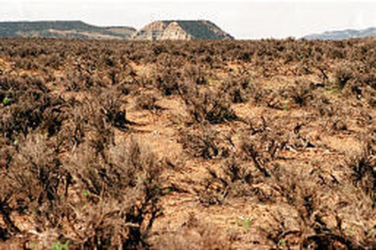 Habitat Initiative Program would help restore areas of sagebrush like this that have been hit hard by drought.