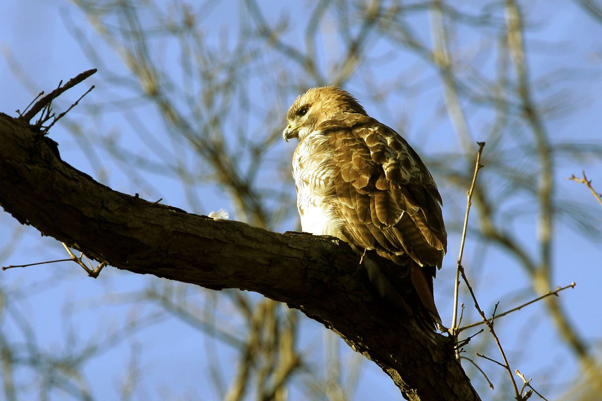 Odds are a hawk won't steal your pet, but you should still