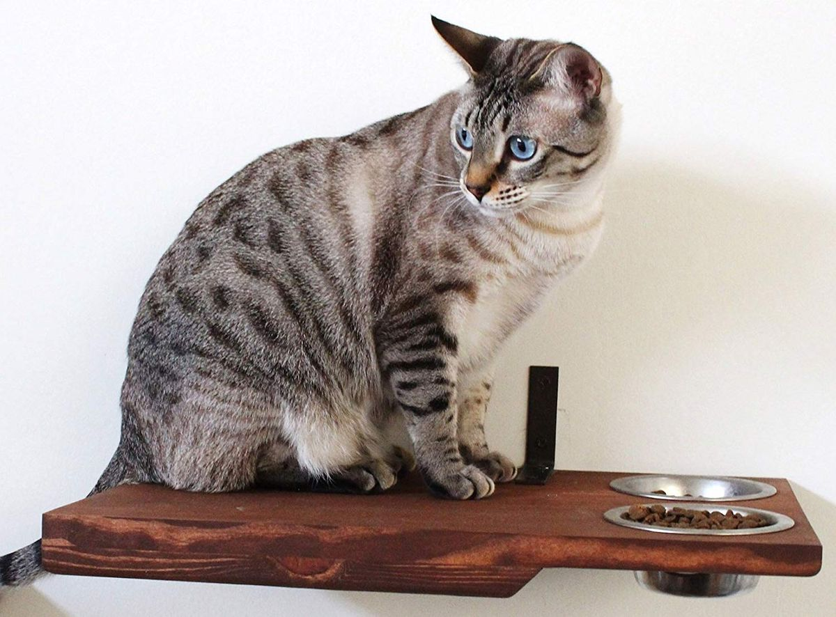 Cat Shelf And Activity Center Shopping Guide This Old House