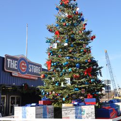 They have completed decorating the Cubs holiday tree in front of the Cubs Store.