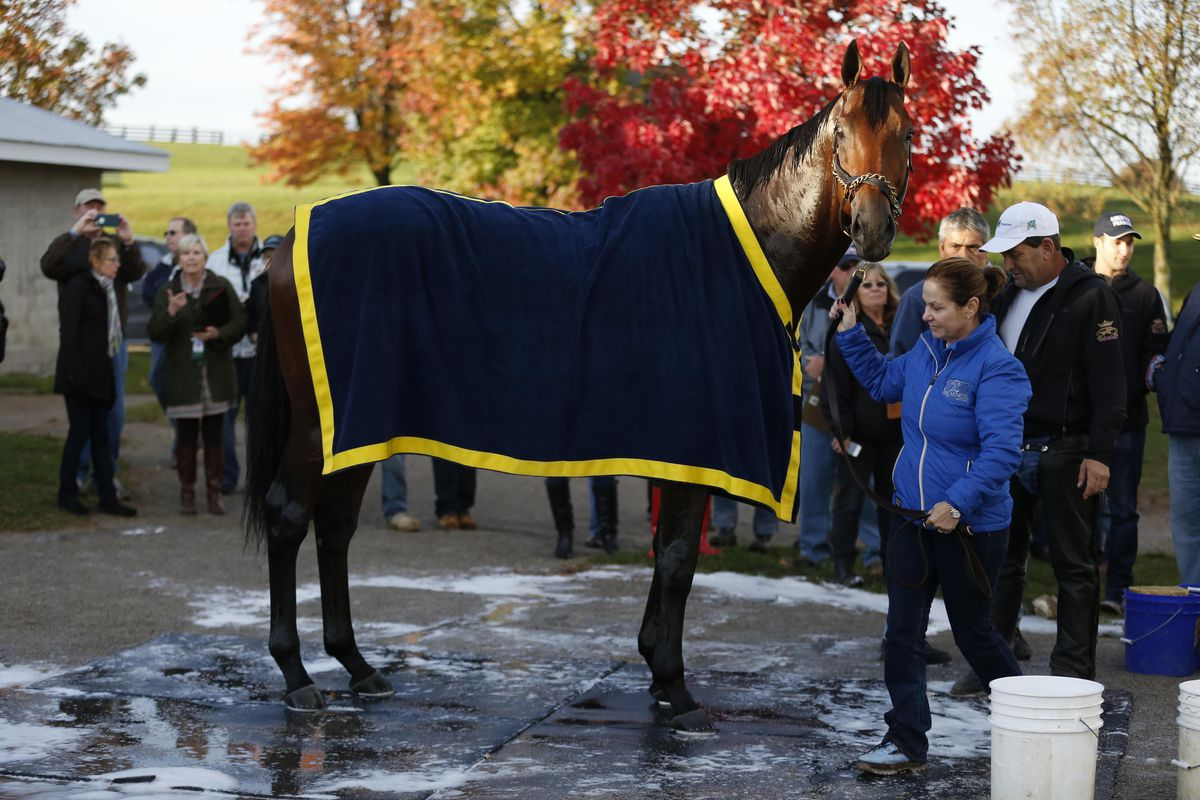 Breeders Cup 2015 Live Stream How To Watch Saturday S