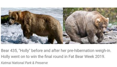 holly - Fat Bear Week is the only sport I care about now