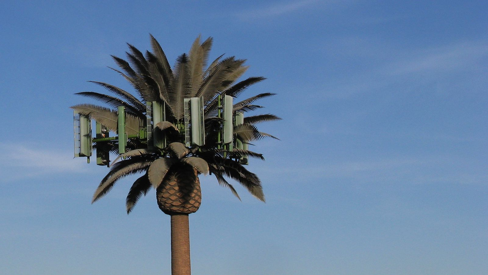 The Bizarre History Of Cellphone Towers Disguised As Trees
