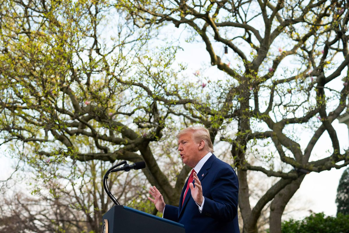 Trump gestures in front of a tree in a navy suit and red tie. The sun is shining down on him.