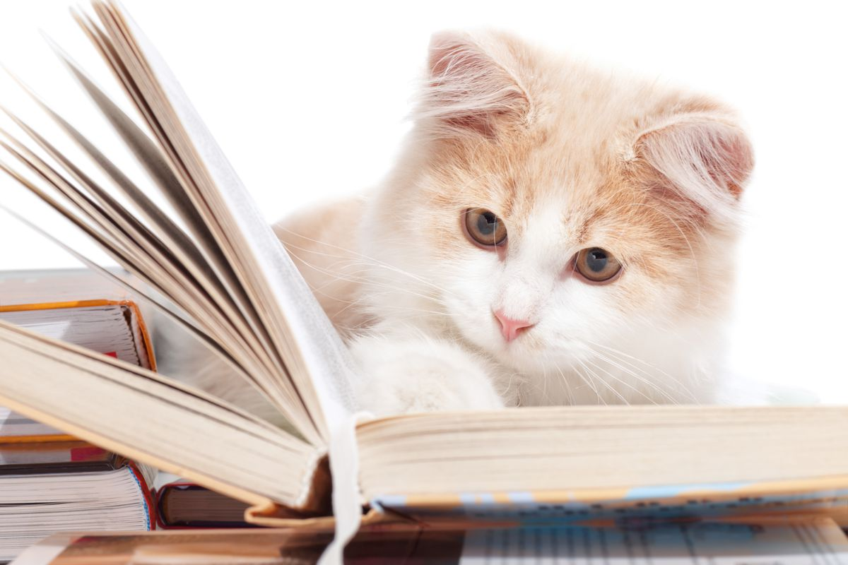 Cats can't read books, but they could with this code!