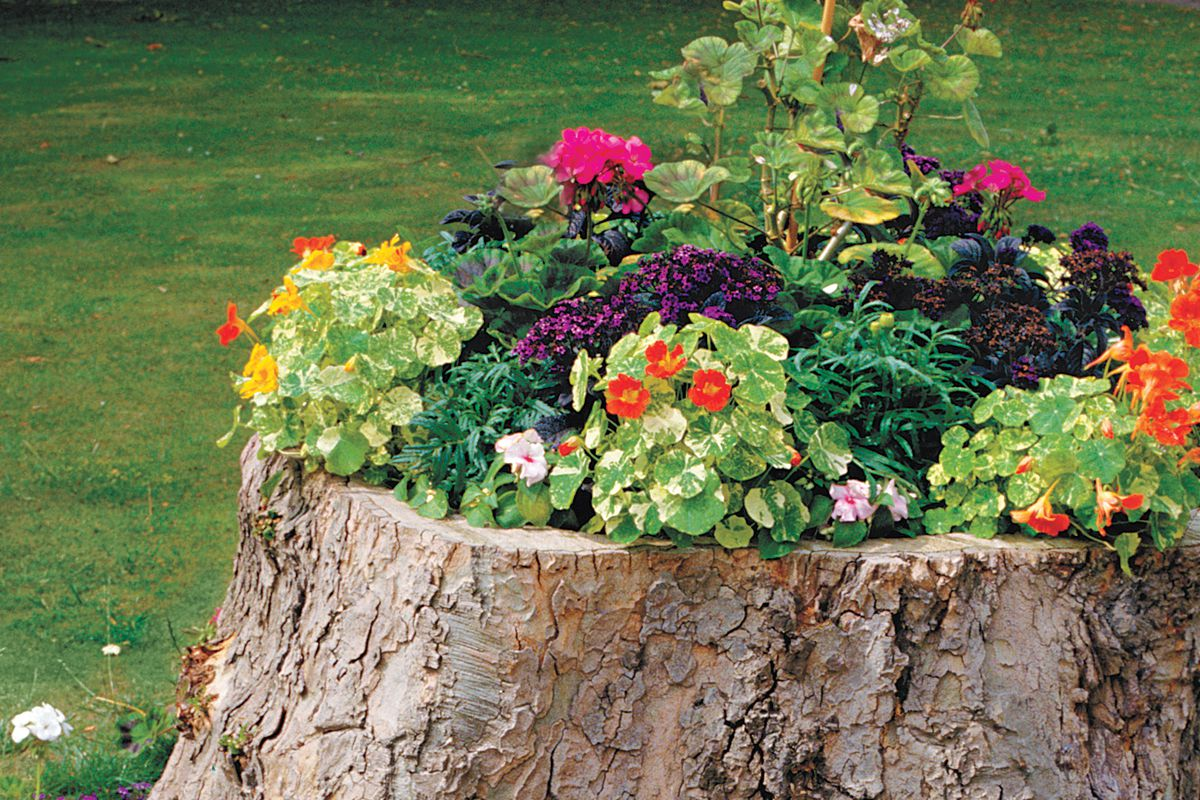 How To Create A Tree Stump Planter This Old House