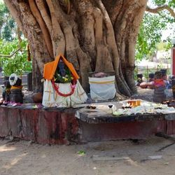 The Munesvaram Temple, near Chilaw, Sri Lanka, is dedicated to the Hindu god Shiva. Near the temple, a large tree is venerated by a sacred pool and the shrine around the tree includes an altar.
