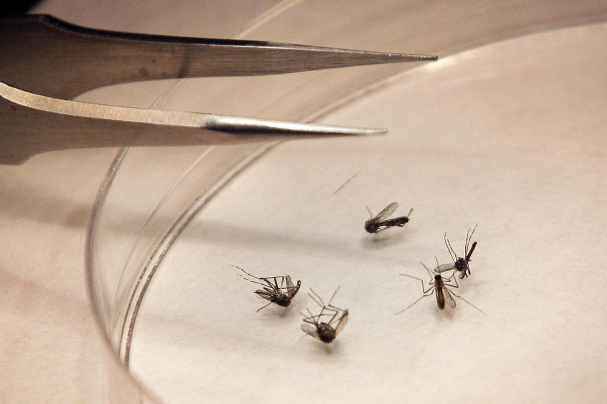 U.S. health officials say there's been an alarming increase in the number of West Nile cases. So far there have been more than 1,100 cases reported through the middle of August. That's three times as many as usually seen at this point in the year. About h