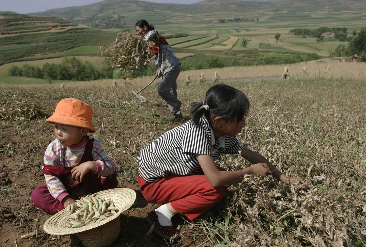 Childen harvesting crops in a field