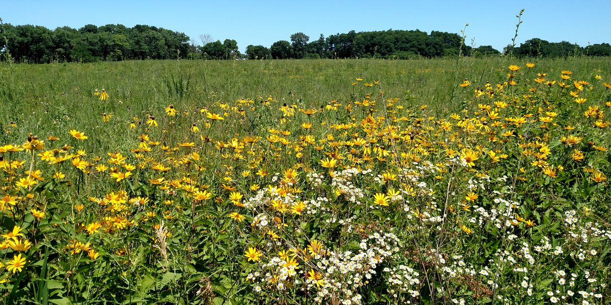 Summer job outside: Youth Conservation Corps at Midewin National Tallgrass Prairie