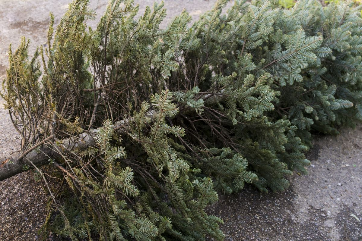 Eagle Mountain's Parks Department will offer free Christmas tree disposal through Saturday, Jan. 20.