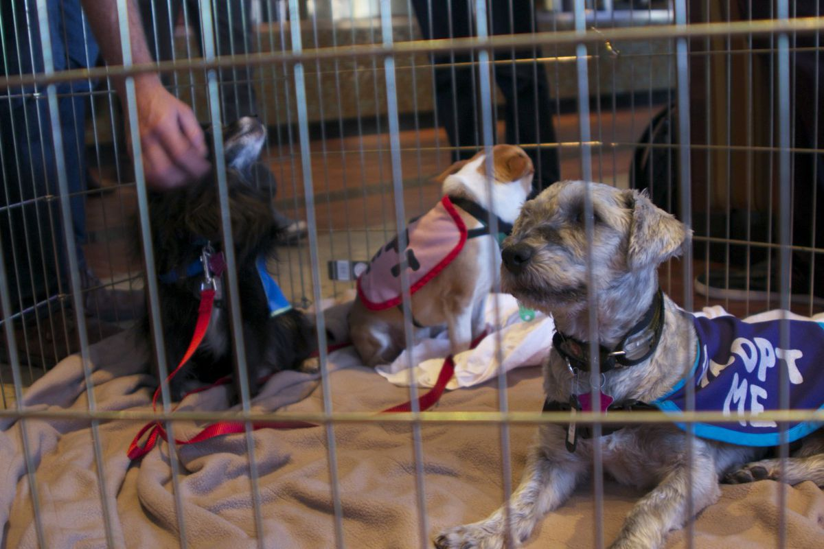 Pups, provided by Family Dog Rescue, snuggled up to attendees
