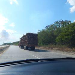 A Truck of Sugar Cane