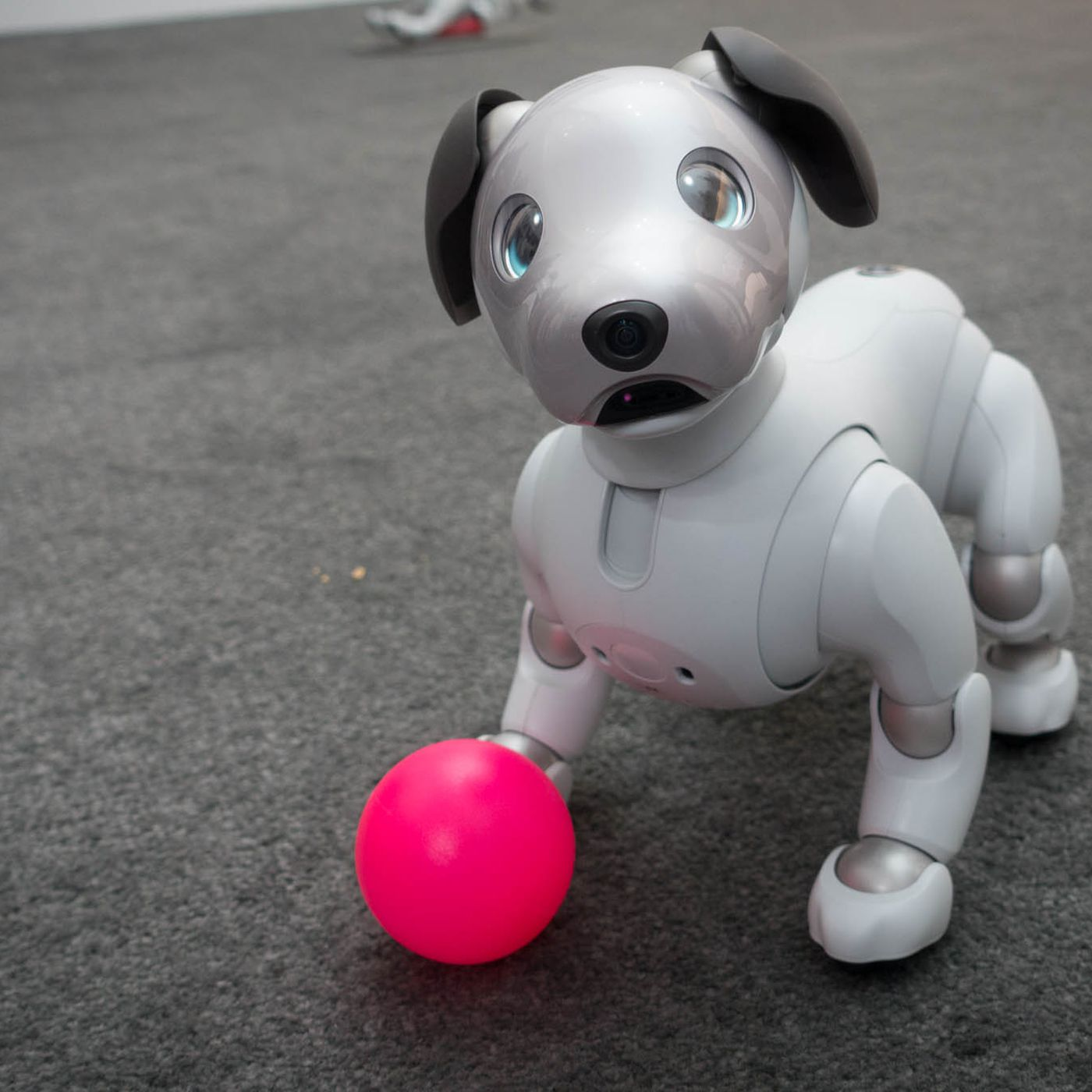 I played with Sony's new Aibo robot dog, and I miss it already - The