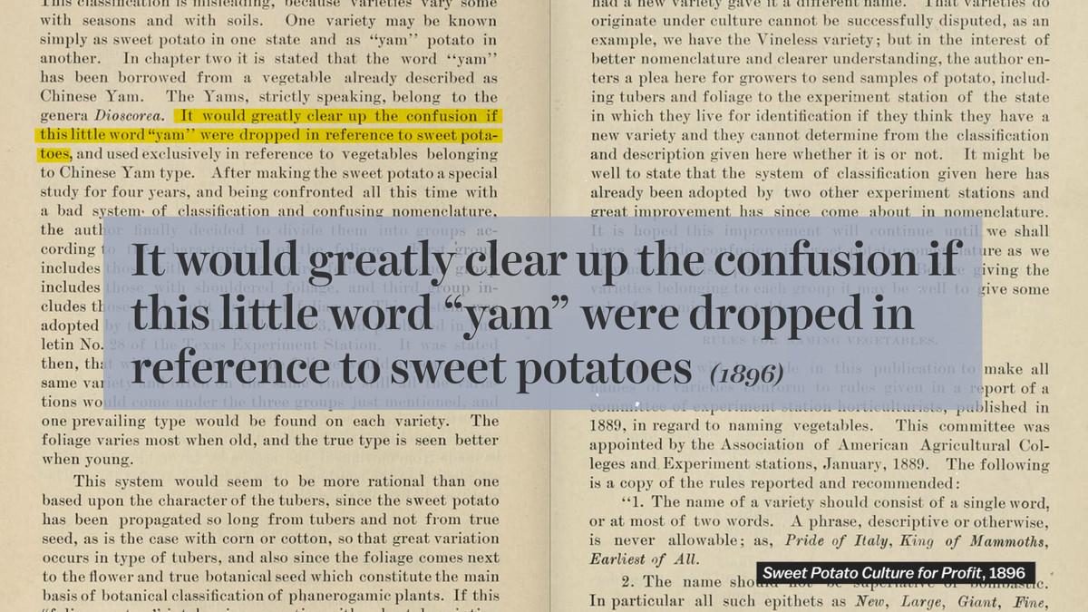 sweet potato 1896 quote