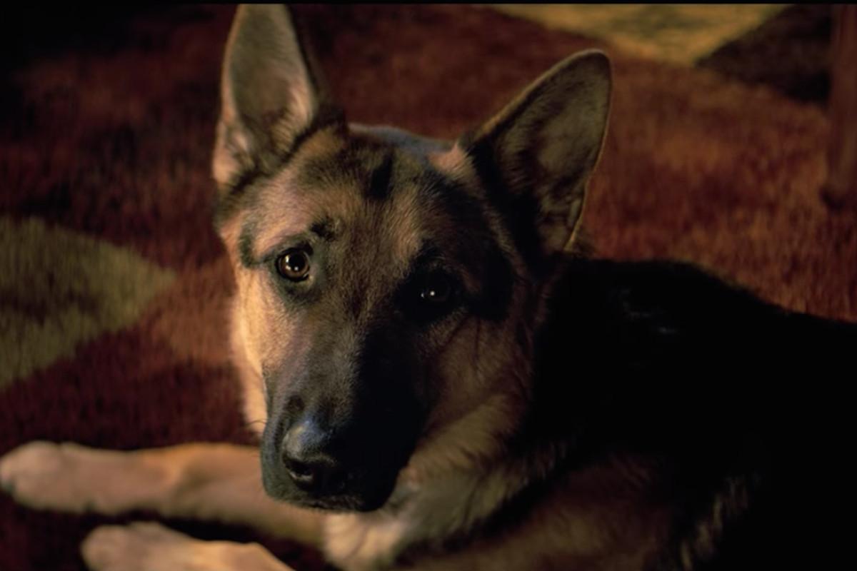 A Dog S Purpose Animal Cruelty Video