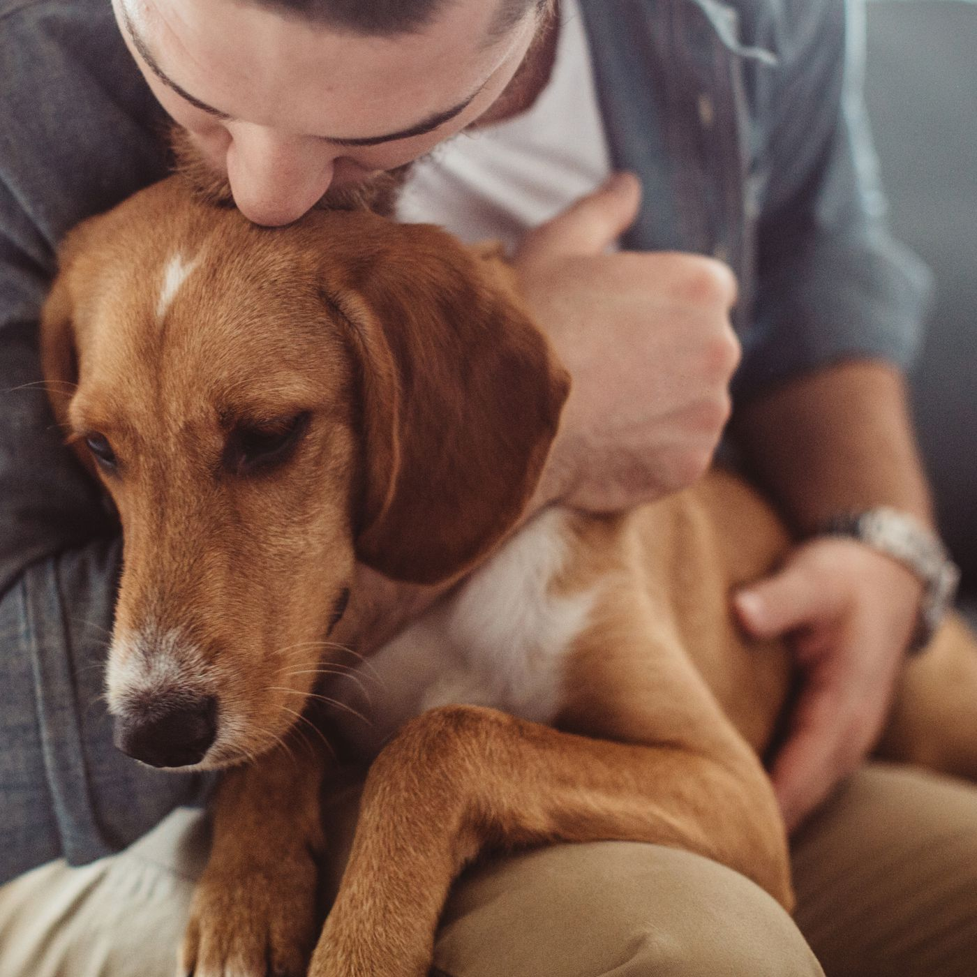 Emotional support animals: there's surprisingly weak