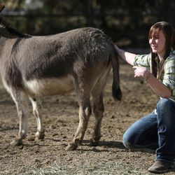Abby Petchinsky, 21, of Mt. Pleasant, pets a donkey used in equine-assisted therapy sessions with Brittani Frade, CMHCi, and Jolene Green, LCSW, at The Barn in South Jordan on Friday, March 17, 2017.