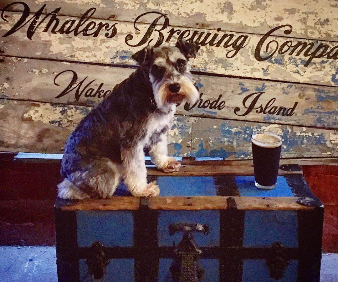 A dog at Whalers