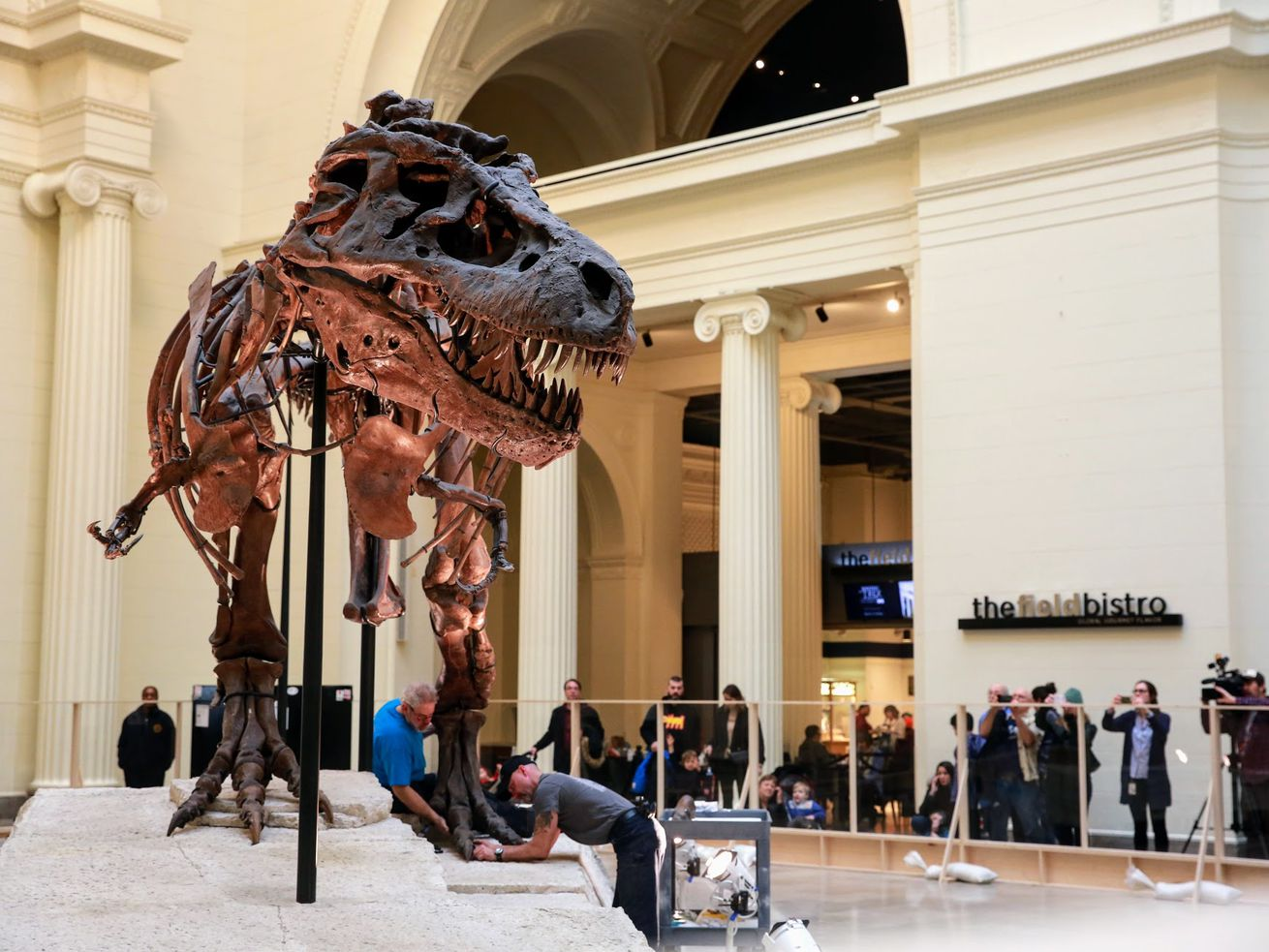 Field Museum staff removed SUE from Stanley Hall back in February.