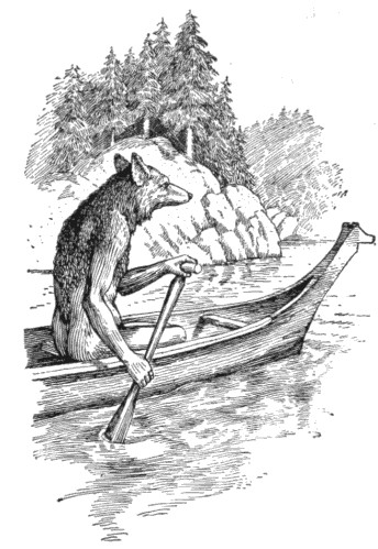 Coyote in a canoe