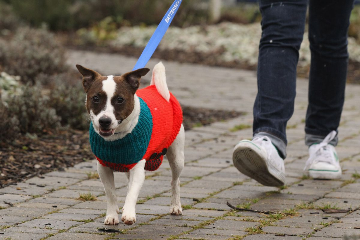 The Rehoming And Rehabilitation Of Unwanted Dogs And Cats During The Christmas Holiday