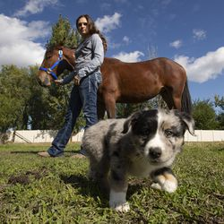 Jaylee Rasmussen is pictured with her mustang, Montana, and her 6-week-old puppy near her home in West Haven, Weber County, on Wednesday, Oct. 2, 2019. The Bureau of Land Management and Utah 4-H have partnered for the Youth and Military Mustang Trail Challenge where youth and veterans choose a wild mustang and have approximately 100 days to turn it into a gentle, adoptable equine companion. Because no one made a bid on Montana, Rasmussen bought her for $25, which was the minimum bid.