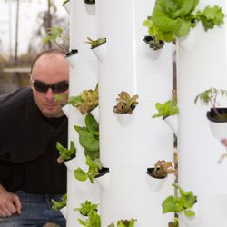 In Hollygrove's vertical aeroponics growing area.