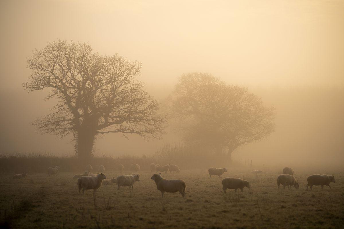 Morning Fog in Northwich, England