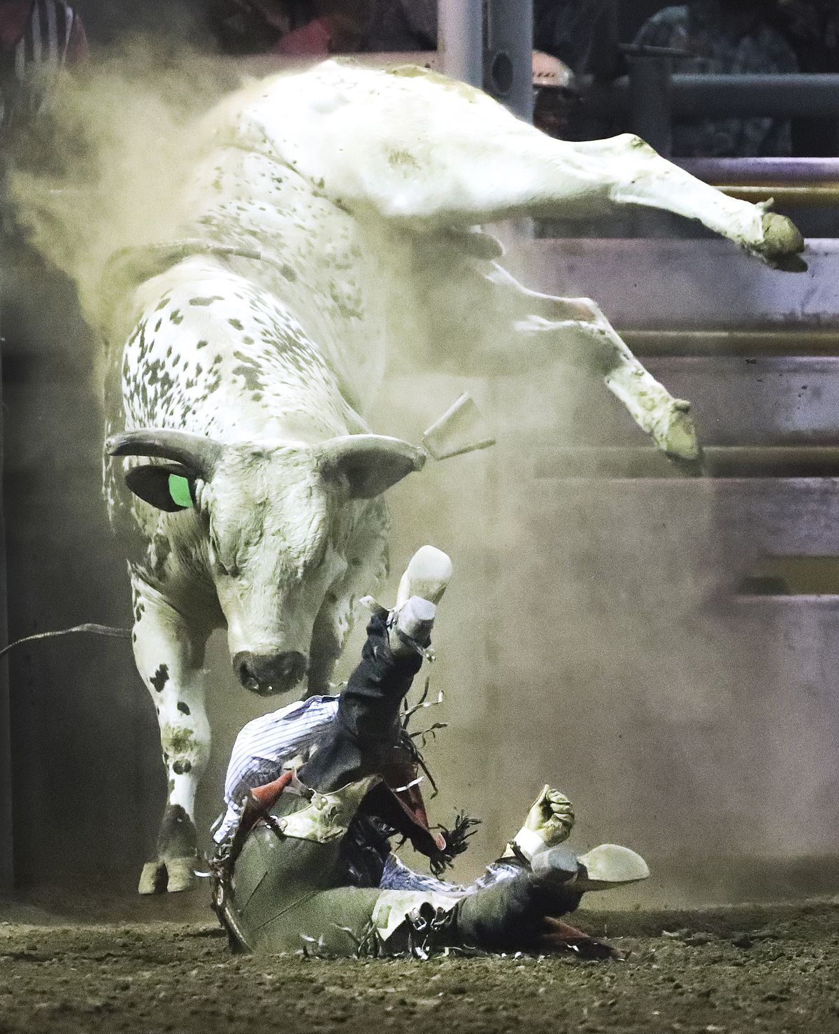 Chance Ekins, of Nephi, Utah, is thrown from a bull during the Magic Valley Stampede PRCA Rodeo at the Twin Falls County Fair in Filer, Idaho, on Thursday Sept 3, 2020.