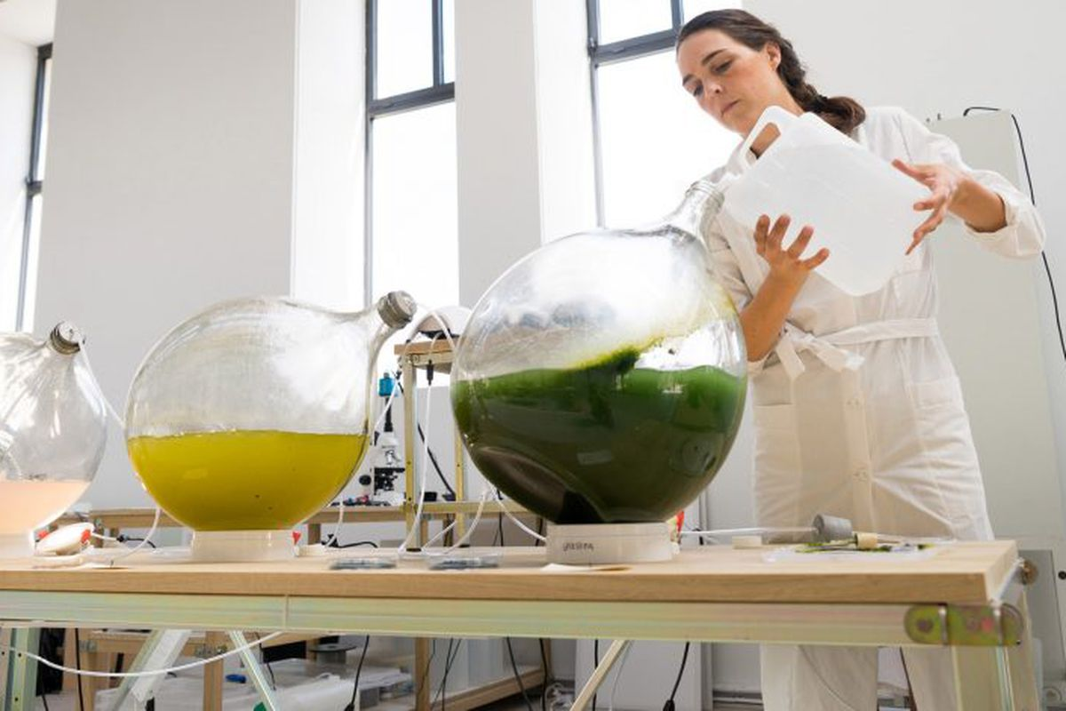 Algae turned into bioplastic for rad 3D-printed objects