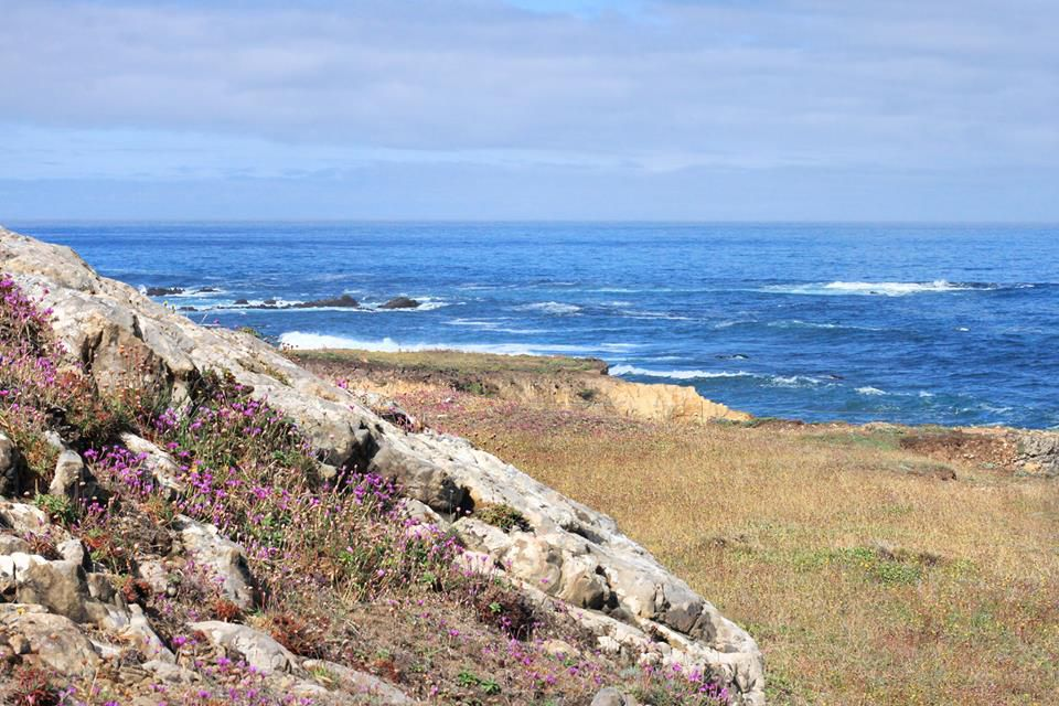 The Mendocino Coast Botanical Garden. In the foreground is a rocky hill with wild flowers. In the distance is the ocean.