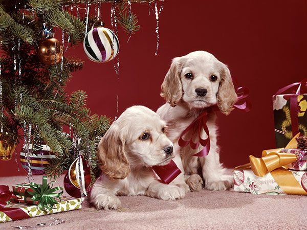 Two dogs near tinsel.