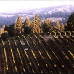 Hirsch Vineyard, Sonoma Coast, California. [Source: Failla Wines]