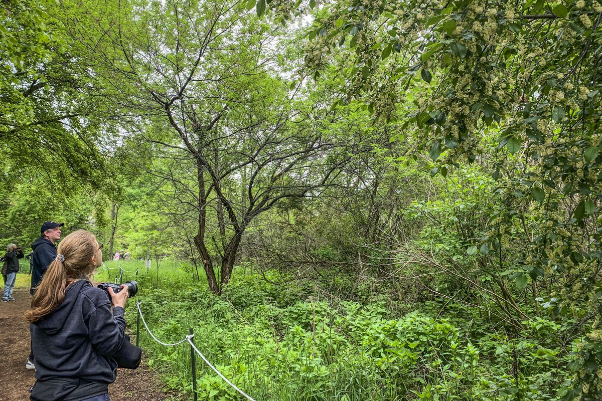 Bird watching is a hobby that spans all generations and skill levels. Birders often carry binoculars and cameras.