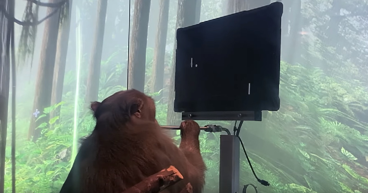 Watch: Elon Musk's Neuralink says this monkey is playing Pong with its mind thumbnail