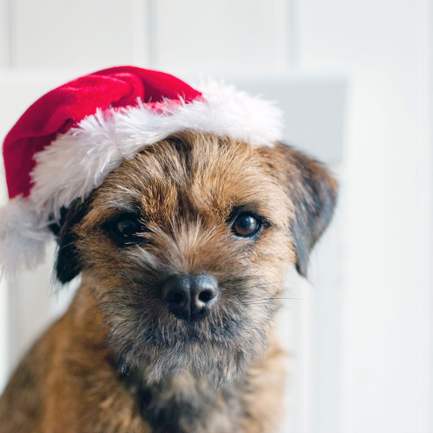 Sainsburys Christmas Pop Up Restaurant Is Aimed At Dogs