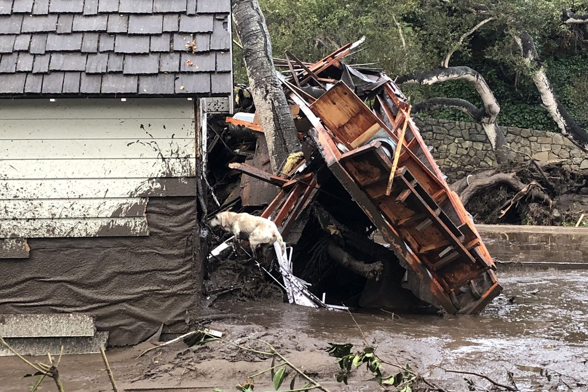 Santa Barbara County Fire search dog Reilly looks for people trapped in the debris left by devastating mudslides in Montecito, California.
