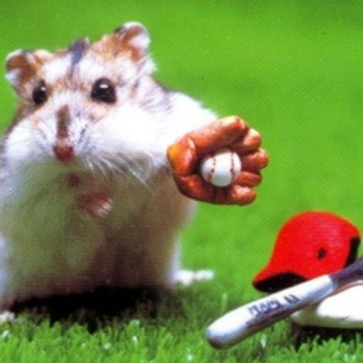 Year of the Hamster